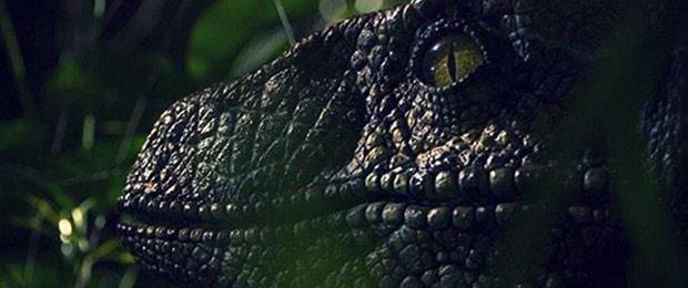 RaptorSuperbowl1-Small