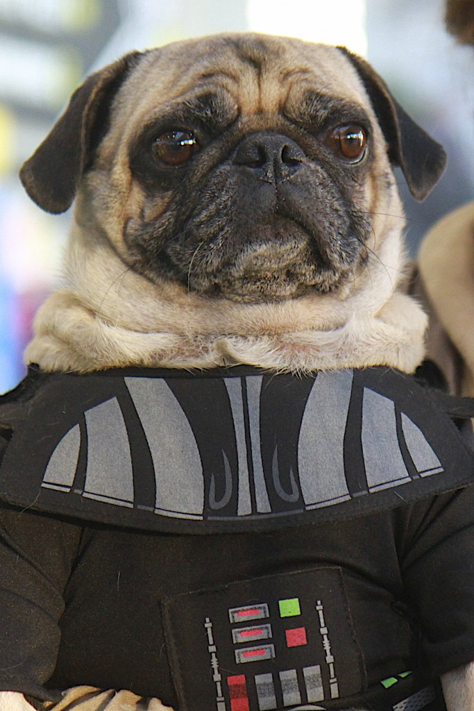 New_York_Comic_Con_Cosplay_2015_Darth_Vader_Pug